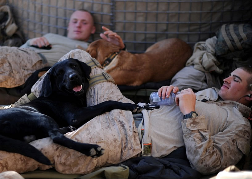 Military Photos Dogs Of War Canine Surge